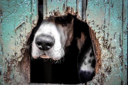 Doggy Door Installation